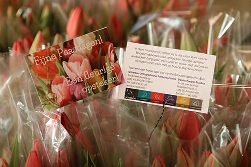 tulpen.jpg#asset:13041